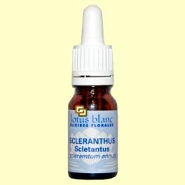 Sclerantus - Scleranthus - 30 ml - Lotus Blanc