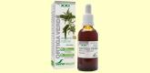 Ortiga Verde - Formula XXI - 50 ml - Soria Natural