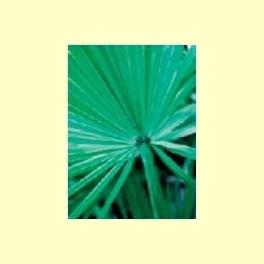 Plantas orientadas a mantener la salud de la próstata - Información